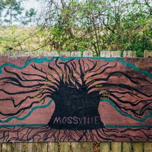 -CR0A9756_MOSSVILLE_TREES